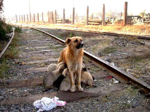 perro-abandonado-parabuenosaires-com
