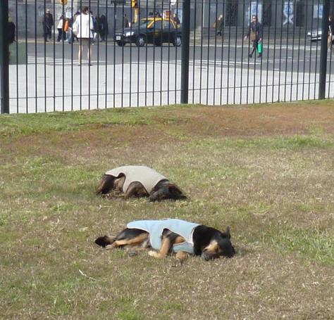 perros-parabuenosaires