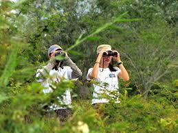 observadores de aves
