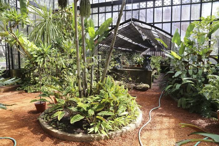 Botánico 3