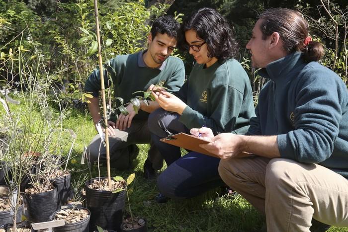 Premian al jard n bot nico por conservar plantas for Jardin botanico medicinal