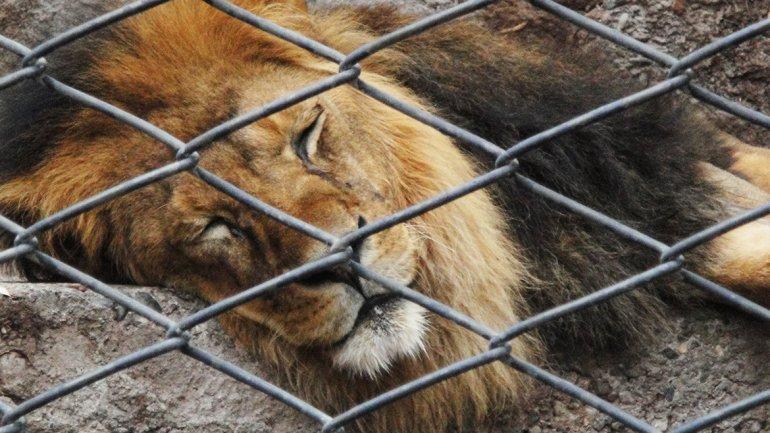 zoo porteño 1