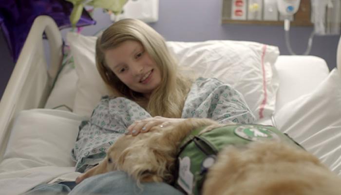 Podrían Ingresan Perros A Hospitales Para Ayudar